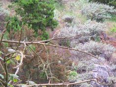 Pajarillo en una rama