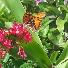 Nature's Beauty in Las Croabas Reserva Nacional (Fajardo, PR) Fajardo, Wedding In Puerto Rico, Fruit, Nature, Plants, Beauty, Naturaleza, Plant, Nature Illustration