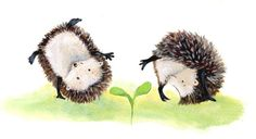 Hedgehog Book, Hedgehog Drawing, Cute Hedgehog, Hedgehog Illustration, Illustration Art, Hedgehog Accessories, Funny Paintings, Postcard Art, Little Golden Books
