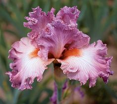 """Social Graces 