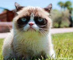 Grumpy cat outside  #GrumpyCat #Photos