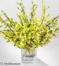 Smithsonian Garden Glow Mokara Orchid Bouquet