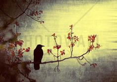 Crow on Flowering Branch - Wall Mural & Photo Wallpaper - Photowall