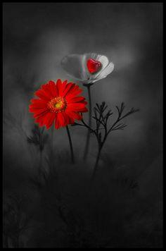 Ideas For Flowers Red Art Colour Splash Photography, Color Photography, Nature Photography, Flower Wallpaper, Nature Wallpaper, Wallpaper Backgrounds, Wallpapers, Red Wallpaper, Art Floral
