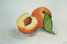 Watercolor peaches #watercolor #peaches #painting
