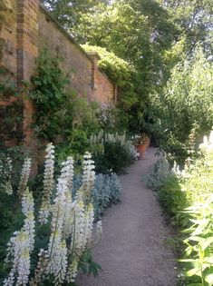The Walled Garden on the Hare Hill Estate, near Macclesfield, Cheshire, which is. The Walled Garde Garden Leave, Walled Garden, Hare, Great Britain, White Flowers, Sidewalk, Modern, Plants, Gardens