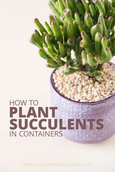 This post will help you make sure you are potting your succulents correctly
