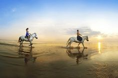 Horse Riding by Trigilidas travel