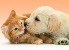 Free HD Wallpapers for your computer: Puppy+Dog+kissing+cat