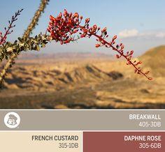 The beauty of desert flowers in full bloom inspires Dutch Boy's September Color of the Month, Breakwall 405-3DB.