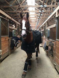 Cute Horses, Pretty Horses, Horse Love, Horse Girl, Beautiful Horses, Animals Beautiful, Horse Stables, Horse Farms, Horse Photos