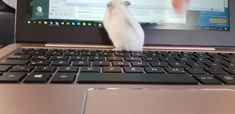 She's checking my work and obviously thinks it's more interesting then I... lol #winterwhite #homeoffice