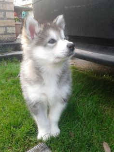 Can I please have you? You would make tommy and I so happy!