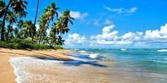 Praia Do Forte, Brazil - Find all the information you need to plan your trip to Praia Do Forte. Photo, itineraries, flights, Praia Do Forte hotels and weather. Plan Your Trip, Travel Guide, Beach, Water, Salvador Ba, Outdoor, Praia Do Forte, Brazil, Littoral Zone