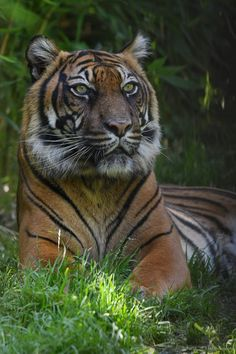 Amazing Animal Pictures, Tiger Pictures, Pumas, Wild Animals, Animals And Pets, Hate People, Big Cats, Science Nature, Animals Beautiful