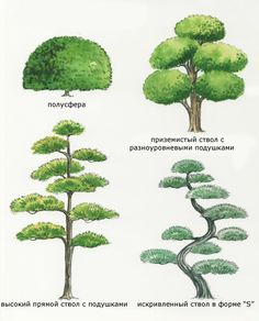 как сформировать дерево зонтиком: 10 тыс изображений найдено в Яндекс.Картинках