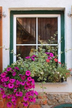 Flowers at the window.