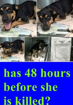 She has 48 hours before she is killed‼ beautiful 8 month Rottie girl at Miami Dade Animal Services. #A1690970 8 month old LOLITA she is gorgeous and sweet and deserves to live!!! Just a baby with an injured right front paw, none weight bearing. HELP!!!!!!! Calling all rescues! — hier: Miami Dade County Animal Services. https://www.facebook.com/urgentdogsofmiami/photos/pb.191859757515102.-2207520000.1428789861./961036317264105/?type=3&theater