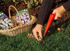 www.rustica.fr - Que faire en septembre au jardin d'ornement ? - Fleurs et plantes