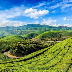 Kerala India #nature #forest #land #travel #today #green #relax #chill #follow #naturelover #beautiful #likes #awesome #followforfollow #vsco