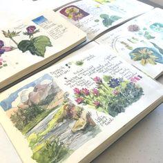 from Kristin Meuser sketchbooks: nature journalling drawing acuarela Travel Sketchbook, Arte Sketchbook, Sketchbook Pages, Art Journal Pages, Art Journals, Journal Prompts, Journal Ideas, Sketchbook Ideas, Sketch Journal
