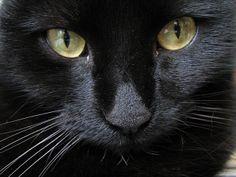 Black cat Sukke