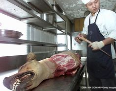 Image detail for -Report Animal Cruelty. Idiots seriously eat DOG.