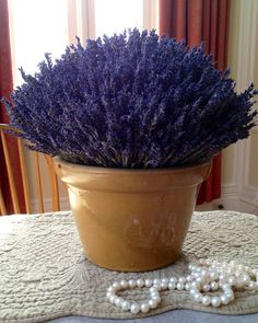 Beautiful pot filled with French Dried Lavender! Great way to decorate your home, give as a house warming present or as a centre piece for your wedding.