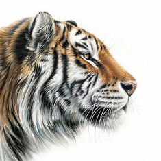 You too can be an artist when you paint with Diamonds! Every kit gives you a chance to create a work of art you can be proud of. This diamond painting kit Wildlife Paintings, Wildlife Art, Animal Drawings, Pencil Drawings, Tiger Sketch, Number Drawing, Pencil Drawing Tutorials, Drawing Ideas, Tiger Art