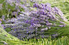 Gartentipps im Juli: Ziergarten - Gartenzauber