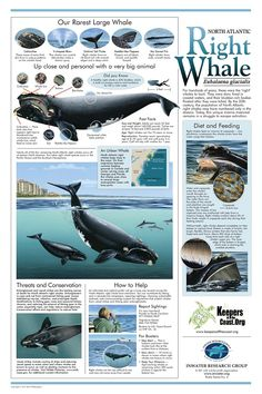 The Right Whale - you can request one for free from the Inwater Research Group