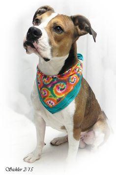 ***SUPER SUPER URGENT!!!*** - PLEASE SAVE DOUG!! - EU DATE: 5/31/2015 -- Doug Breed:Boxer (mix breed) Age: Adult Gender: Male Size: Large Shelter Information: City of Emporia Animal Shelter 1216 Hatcher  Emporia, KS Shelter dog ID: doug Contacts: Phone: (620)3406345 Name: Shelter Staff email: ashelter@emporia-kansas.gov  Read more at http://www.dogsindanger.com/dog/1426557535127#foSxUoM2LR9w40Cu.99