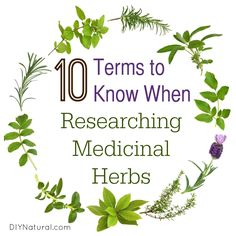 Medicinal Herbs - 10 Terms You Need to Know for Research
