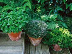 container kitchen garden herbs