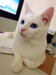 猫おもしろ画像 66.0
