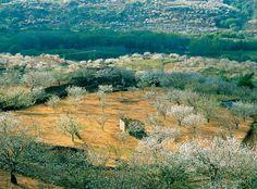 El valle del Jerte en Cáceres, España - 20 viajes para amantes de las flores