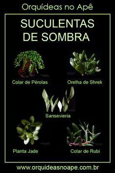 Succulent Gardening, Garden Terrarium, Planting Succulents, Planting Flowers, Eco Garden, Organic Horticulture, Plants Are Friends, Herbs Indoors, Cactus Y Suculentas