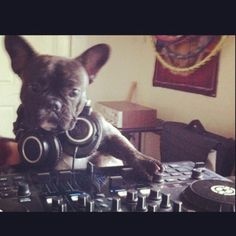 hottest DJ