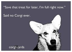 Thought my girl would like this one.  Maybe someday I'll have a cute little Corgi Furry grandbaby. :)