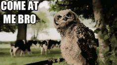 Sociolatte: Come at me Bro Meme [Pics]