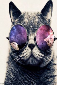 Pictures Of Galaxy Hipster Cat