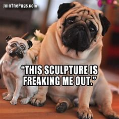 Funny Pug Dog Meme- This happened with us and Chloe