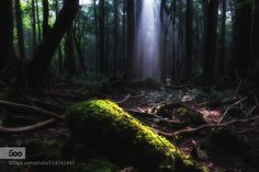 down light by takaki. Please Like http://fb.me/go4photos and Follow @go4fotos Thank You. :-)