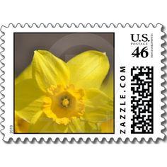 Beautiful Yellow Daffodil Flower Stamp