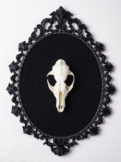 Fox Skull on old restored frame