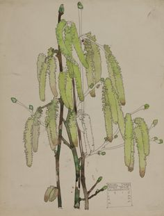"""Hazel Tree, Lamb's Tails"" 1915  (watercolour) CRE MACKINTOSH, Charles Rennie; (Scottish; 1868-1928)"