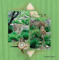 Auteur : Isabelle Jolivat   Azzaworld Album Photos, 2 Photos, Isabelle, Zoo Animals, Savannah Chat, Projects To Try, Scrapbook Layouts, Tigers, Kangaroo
