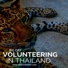 The Jobs Abroad Bulletin - Volunteering