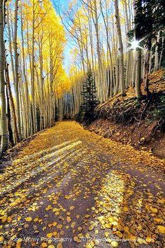 ✯ Waterline Road, Flagstaff, Arizona