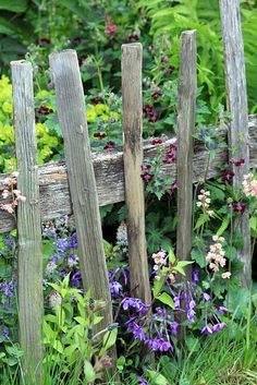 Old and Weathered Fence